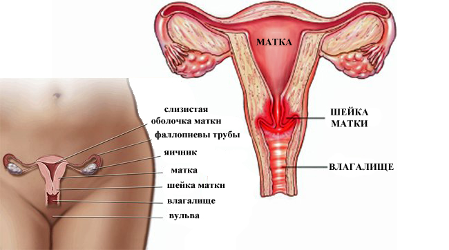 Лечение хламидиоза у женщин: симптомы, признаки, препараты ...